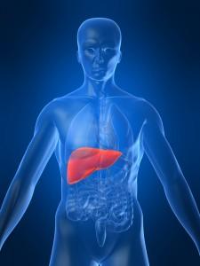 Stem Cells Liver